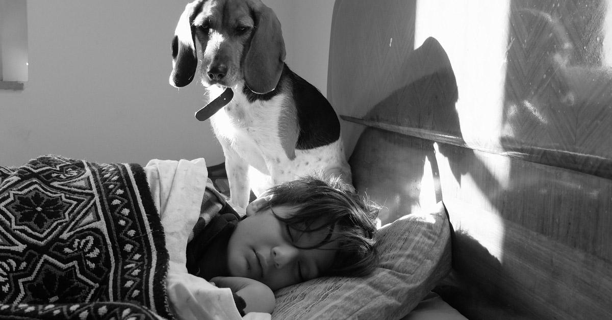 Beagle avec un enfant qui dort